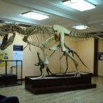 タルボサウルスとティラノサウルスの違いについて