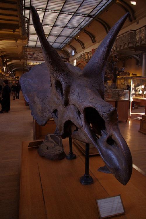 トリケラトプス 化石 日本