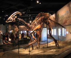 パラサウロロフス 恐竜 草食