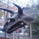 恐竜トリケラトプスの仲間の種類について