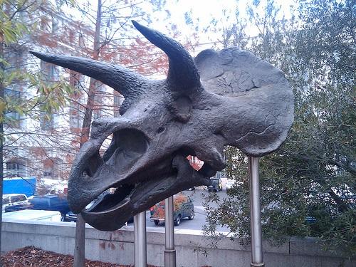 トリケラトプス 恐竜 仲間 似てる