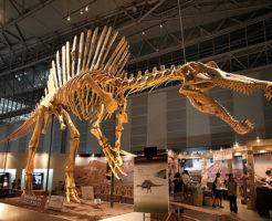 スピノサウルス 化石 値段