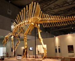 スピノサウルス 化石 展示