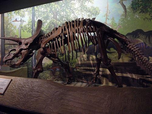 トリケラトプス サイ 大きさ