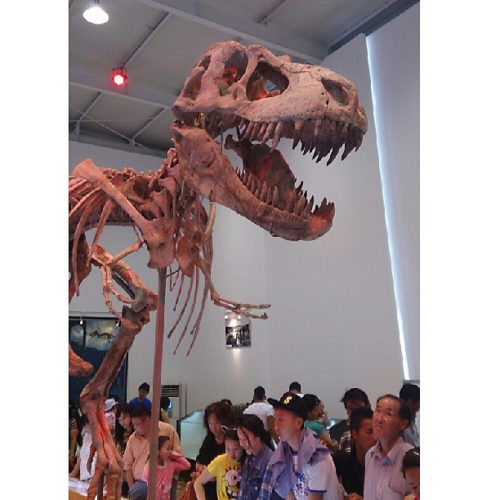 タルボサウルス 恐竜