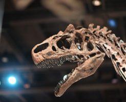 ティラノサウルス 歯 日本