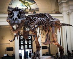ティラノサウルス 骨 数