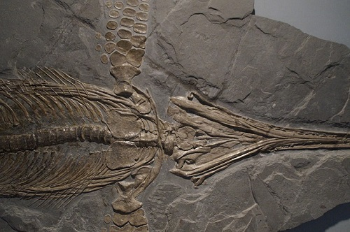 イクチオサウルス 大きさ