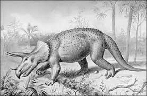 トリケラトプス  餌