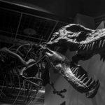 ティラノサウルスの歯の特徴や大きさ、本数について