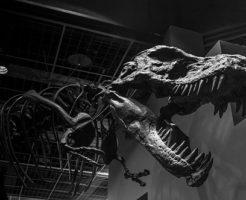 ティラノサウルス 歯 特徴 大きさ 本数