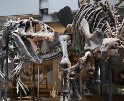 ティラノサウルス 恐竜 骨