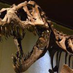 ティラノサウルスの腕や手の力や役割について