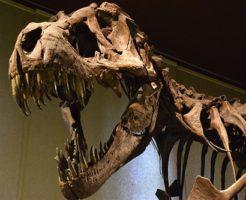 ティラノサウルス 腕 手 役割