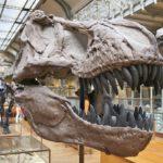 ティラノサウルスの前足の大きさはどれくらい?なぜ前足の方が小さいの?