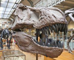 ティラノサウルス 前足 大きさ
