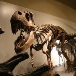 恐竜ティラノサウルスの皮膚の色は何色だったの!?