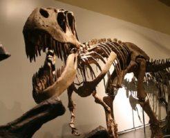 ティラノサウルス 恐竜 色