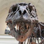 化石で見る恐竜の歴史!日本にもティラノサウルスはいた!?