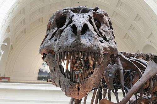 【ティラノサウルス 化石 日本