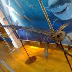 モササウルスの特徴や大きさはどれくらい?