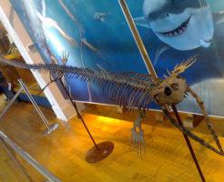 モササウルス 特徴