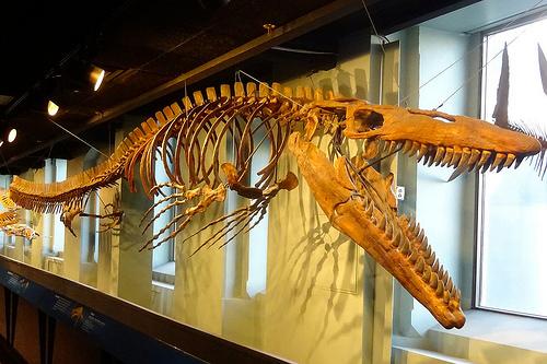 モササウルス 頭骨 大きさ