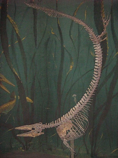 モササウルス 歯 価格