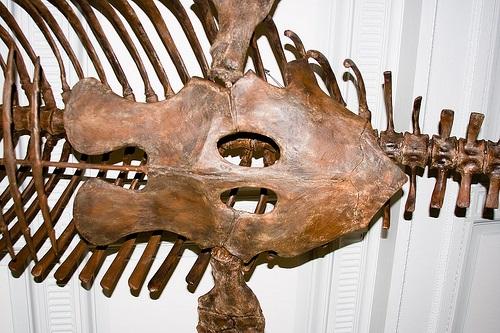 モササウルス 歯 特徴 大きさ