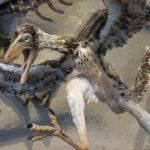 始祖鳥って鳥の祖先なの!?共通点はどこ?