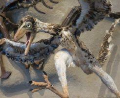 始祖鳥 鳥 共通点 祖先