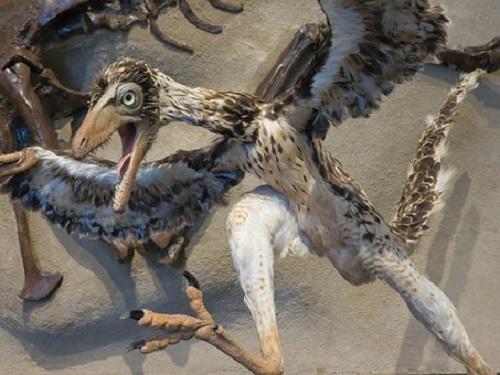 a始祖鳥 鳥 共通点 祖先
