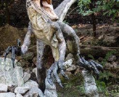 ヴェロキラプトル 爪 化石
