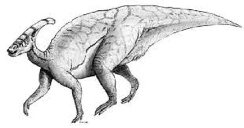 パラサウロロフス 化石