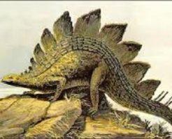 ステゴサウルス 恐竜 草食