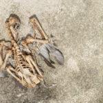 始祖鳥が持っている爬虫類の特徴って何!?