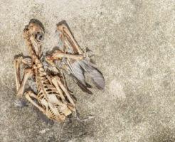 始祖鳥 爬虫類 特徴