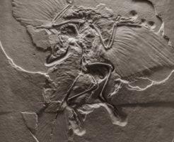 始祖鳥 恐竜 絶滅