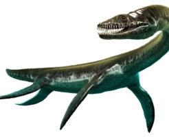 プレシオサウルス歯 化石