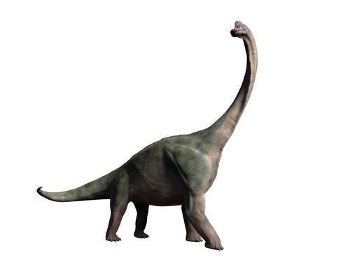 ブラキオサウルス 化石