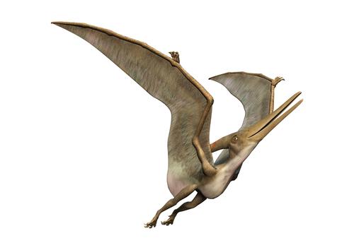 プテラノドン 恐竜 種類