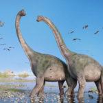ブラキオサウルスとブロントサウルスの違いについて