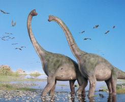 ブラキオサウルス ブロントサウルス 違い
