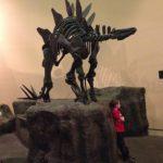 日本でステゴサウルスの化石が見れる場所は何処!?