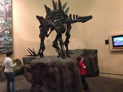 ステゴサウルス 化石 日本