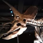 トリケラトプスの化石は何体ぐらい発見されているの?場所は!?