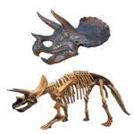 トリケラトプスの化石の平均値段ってどれくらい!?