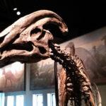 パラサウロロフスの化石の特徴について