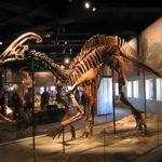 草食恐竜パラサウロロフスってどんな恐竜!?