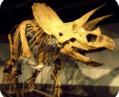 トリケラトプス 名前 由来 英語 発音